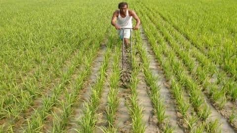 Boom in agriculture and manufacturing sector