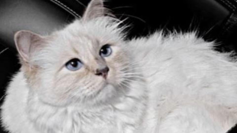 चाँदी के बर्तन में खाने वाली यह बिल्ली अब बनेगी 1,385 करोड़ रुपये की मालकिन