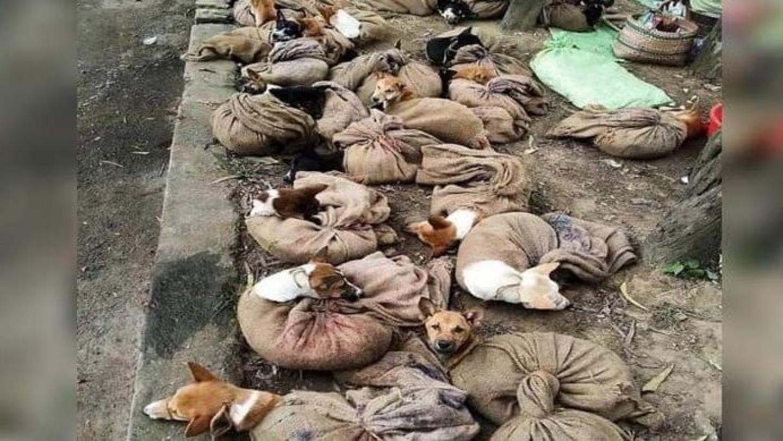 नागालैंड सरकार ने लगाया कुत्ते के मांस की बिक्री और आयात पर प्रतिबंध
