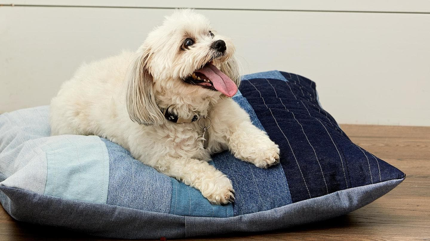 Make a comfortable bed for your pet