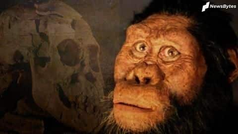 Scientists discover 3.8 million-year-old fossil of ancient human ancestor