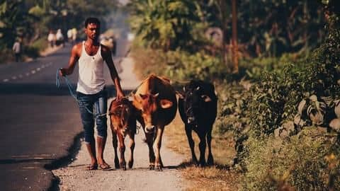 Harassed by unrelenting cow vigilantism, Goa meat-traders go on strike