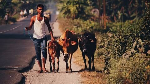 Another Akhlaq? Police book cow vigilantism victims, assaulters let go