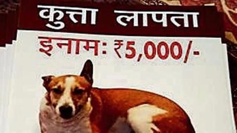 The case of the missing dogs of Gurugram