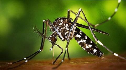 India issues advisory after three Zika cases in Gujarat