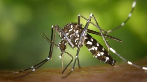 US tech giants developing technology to fight mosquitoes