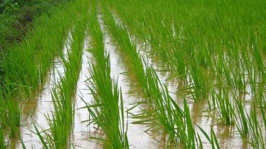 Monsoons bring optimism for Indian agriculture
