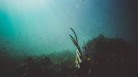GSI study unveils treasure trove of resources in Indian waters
