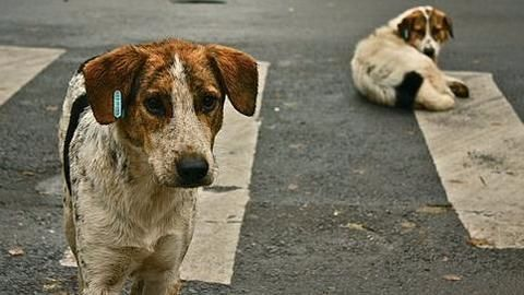 India's stray dog menace: The big picture