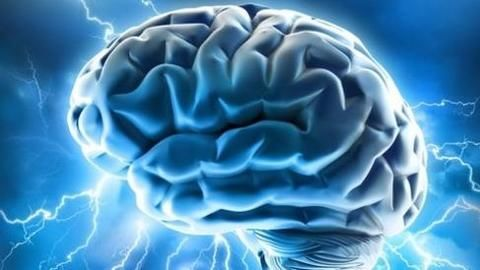 """Does our brain have a """"GPS"""" neuron?"""
