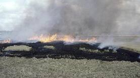 Centre to earmark Rs. 1,000 crore for curbing stubble burning