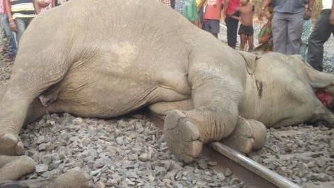Four elephants killed by speeding train in Orissa