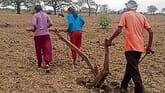 UP-family has no oxen, no tractors, so daughters plough land
