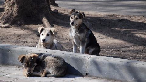 Authorities should follow rules in culling dogs: SC