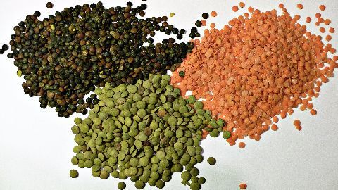 Govt hikes support prices for pulses