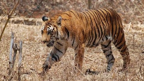 New Wildlife Action Plan invites suggestions
