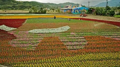 Major flower producing areas