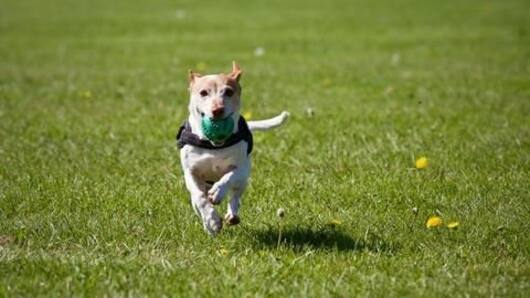 Hyderabad to get country's first dog park