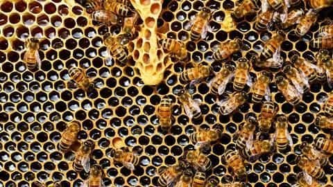 Bengaluru: Two men die of bee sting waiting for doctor