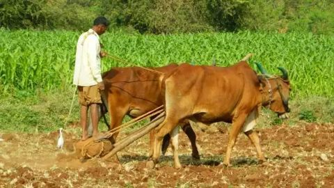 Agriculture in India is still monsoon dependent