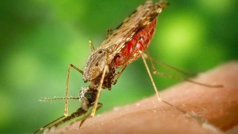 21 countries may eliminate malaria by 2020
