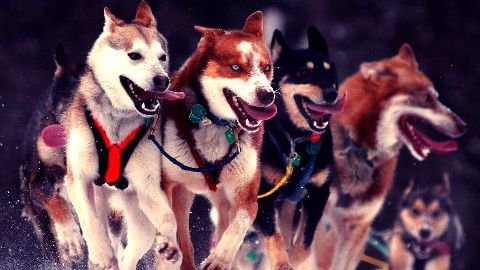Ending the import of foreign dogs