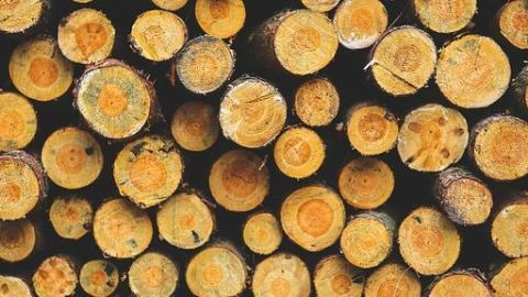 How is the timber mafia responsible?