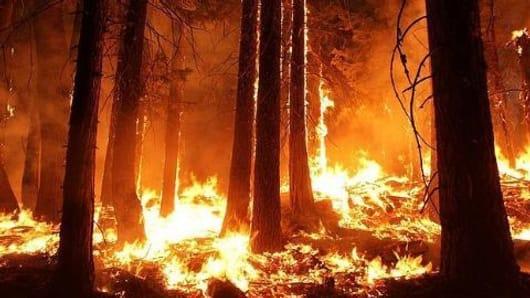 Uttarakhand's forests on fire