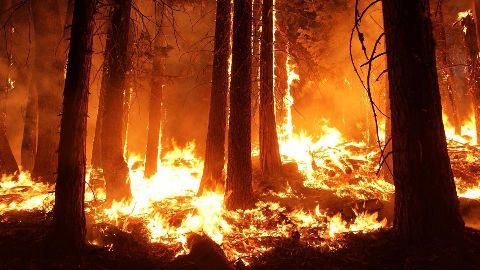 Wildfire returns to Fort McMurray
