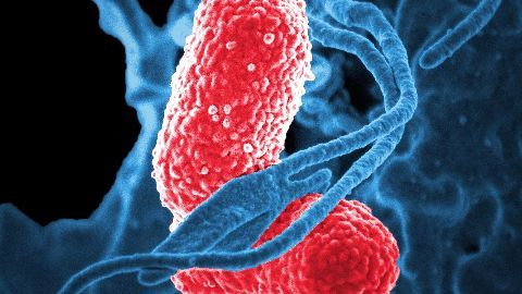 Superbugs: As big a risk as terrorism
