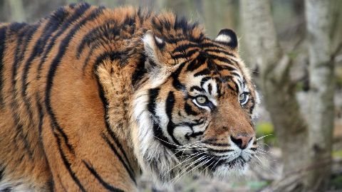 More gruesome discoveries at Tiger Temple