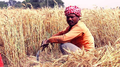 Making Indian agriculture climate resilient