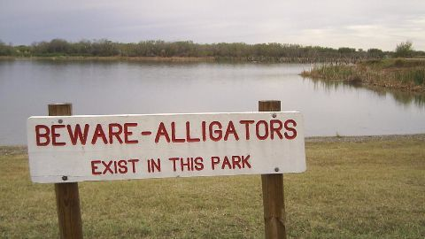 Disney installs gator warnings, barriers after mishap