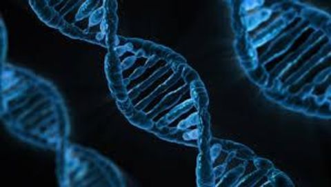 Researchers look to enable information storage in DNA