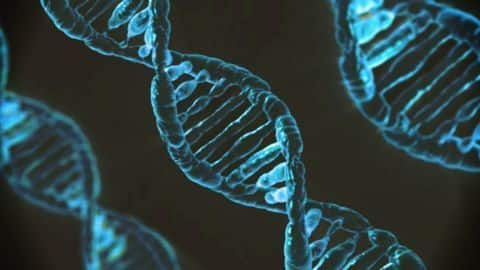 Researchers take step toward recreating faces of criminals from DNA