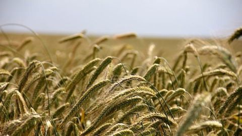 The approaching revolution in agriculture