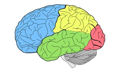 Neuroscience study which identifies potential criminals!