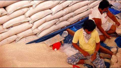 Grains for Brains: Thai university accepts rice as tuition fees