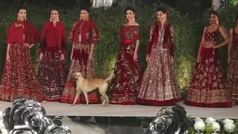 Dog crashes Sidharth Malhotra's fashion show, steals limelight and hearts