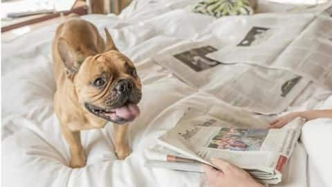 Top five most luxurious dog resorts around the world