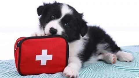 Simple first aid tips for pet parents
