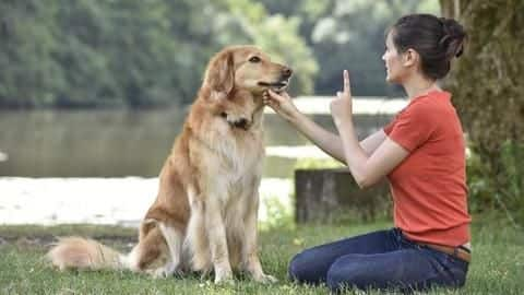 Training your dog? Better avoid these five common mistakes