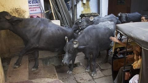 Men attacked in South Delhi over cattle transport