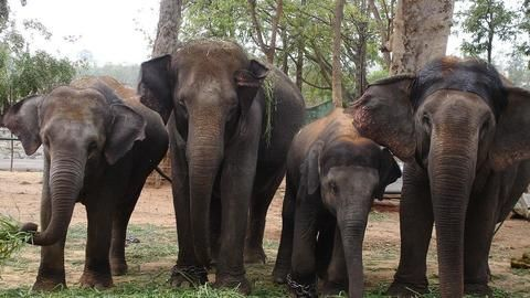 Do elephants kill more than Maoists in Jharkhand?