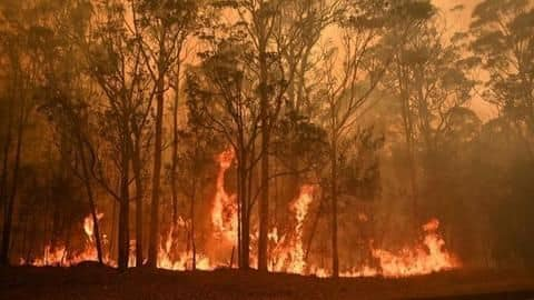 How bad are Australia's fires and how can you help?