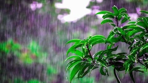 #HealthBytes: How can you boost your immunity this monsoon