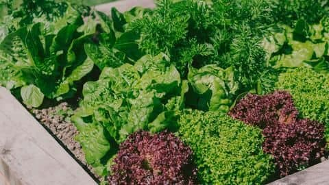 These vegetables can be easily grown at home