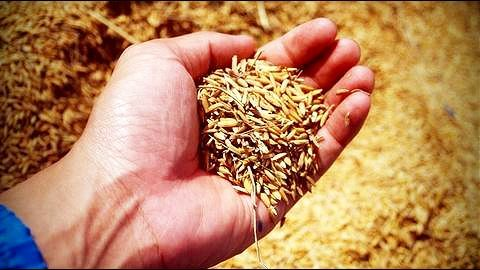 Centre's forecast for foodgrain production in 2016-17