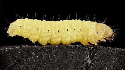 Plastic-eating waxworms: The answer to India's plastic pollution?