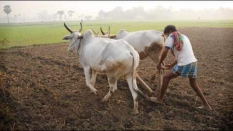 Telangana: Farmers to get free Rs. 5 lakh life insurance